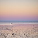 shark bay sunrise by col hellmuth