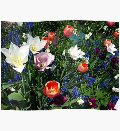 The season of tulip splendour Poster