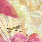 Dragonfly  by susanPerez