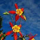 Blue Skies & Columbine by Tori Snow