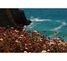 California Naturals Photographic Print