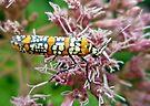 Ailanthus Webworm Moth - Atteva punctella by MotherNature
