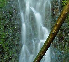 Indian Canyon Creek by Paul Morgan