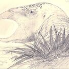 California Condor pencil sketch by Pete Janes