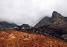 Misty mountain (Palmietberg, Cape) by Elizabeth Kendall