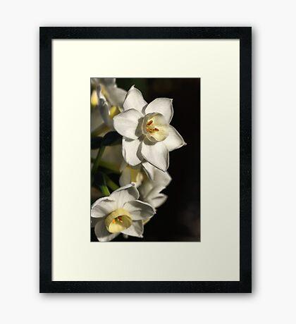 Daffodils Day Framed Print