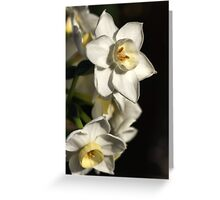 Daffodils Day Greeting Card