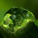 My Green world....... by AroonKalandy
