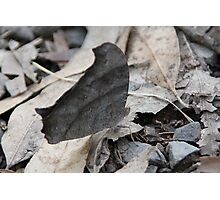 It's not a dead leaf! It's a... butterfly!! Photographic Print