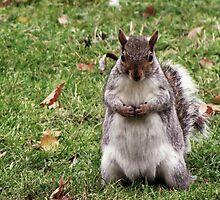Waiting squirrel by meta