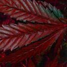 RED! by FloraDiabla