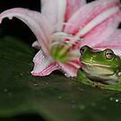 The frog and his flower by Cathie Trimble