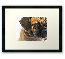 Puggle Portrait Framed Print