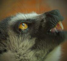 Lemur teeth by Martina Nicolls