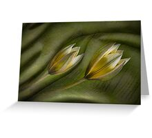In a Dream - Tulipa Tarda Greeting Card