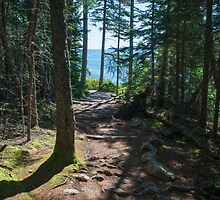 A Walk in the Woods – Acadia National Park, Maine by Jason Heritage