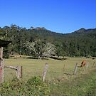 Tallebudgera Valley #2 by aussiebushstick