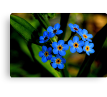 Forget-Me-Nots, Manfield Scar,River Tees, England Canvas Print