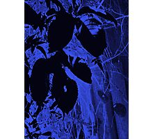 Disco Leaves ... Photographic Print
