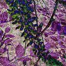 wisteria and glass... by dabadac