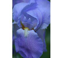 Blue Beard Photographic Print