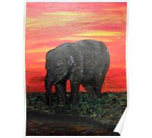 Baby Elephant Poster