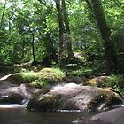 Dartmoor Waterfalls  by Kelly-Ann Gordon