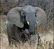 Annoyed Female Elephant by ten2eight