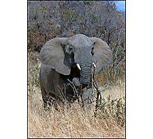 Annoyed Female Elephant Photographic Print