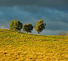 Paddock, Jamieson Valley by - Zig -