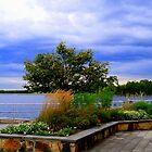 View  Manasquan Reservoir   by Rick  Todaro