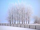Frozen Poplar Trees II, Northern Ireland by Ludwig Wagner
