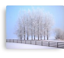 Frozen Poplar Trees II, Northern Ireland Canvas Print