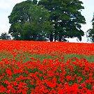 Fields of Red by vivsworld