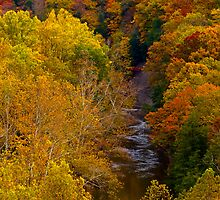 """Tinker's Creek and Autumn Foliage""  by Robert Burdick"