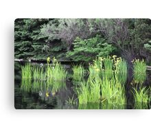 Denver Botanic Gardens Canvas Print