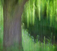 Weeping Willow Tree, Norfolk by DaveTurner