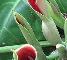 Hawaii Flower by Bixie