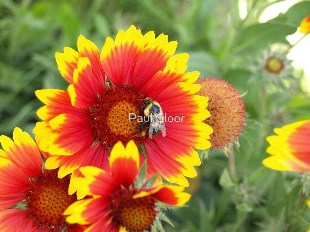 Bee at work by Paul Gloor