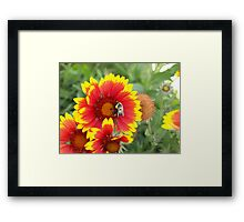Bee at work Framed Print