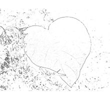 natural love of nature Photographic Print
