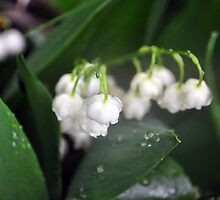 Lily of The Valley by Ljartdesigns