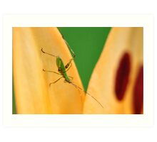 Cricket on orange lily Art Print
