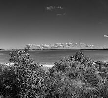 Yara Bay Panorama by Mark  Lucey
