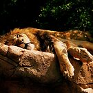 *The Lion Sleeps Tonight* by DeeZ (D L Honeycutt)