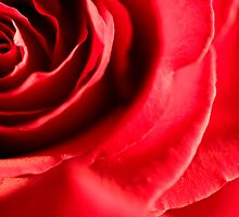 Red Red Rose by Melanie Simmonds