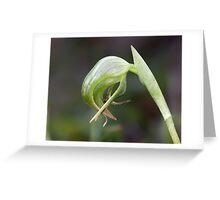 ~ Nodding Greenhood Orchid ~ Greeting Card