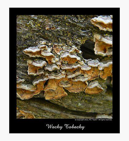 Wacky Tobacky Photographic Print