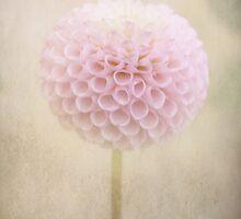 Lollipop by Margi