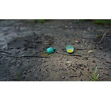 Broken Egg Photographic Print